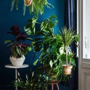2 // Boho // Plants // Indoor Jungle