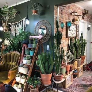 3 // Boho // Plants // Indoor Jungle