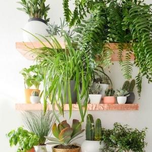 6 // Boho // Plants // Indoor Jungle