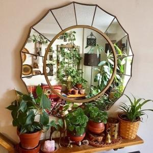 5 // Boho // Plants // Indoor Jungle