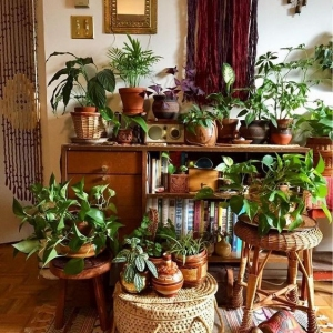 8 // Boho // Plants // Indoor Jungle