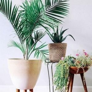 9 // Boho // Plants // Modest Plant Mama Vibes
