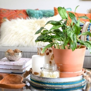 8 // Boho // Plants // Modest Plant Mama Vibes