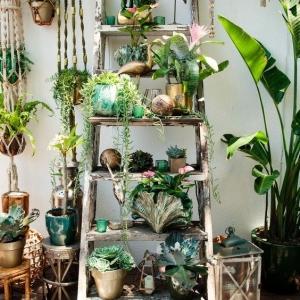 2 // Boho // Plants // Outdoor Spaces