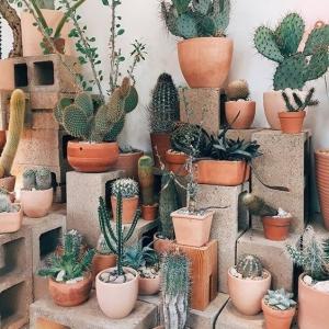1 // Boho // Plants // Outdoor Spaces