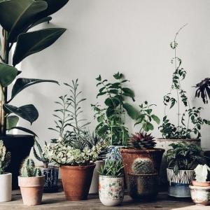 1 // Boho // Plants // Somewhere In Between