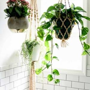 4 // Boho // Plants // Somewhere In Between