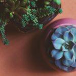 Go Boho // With Plants!
